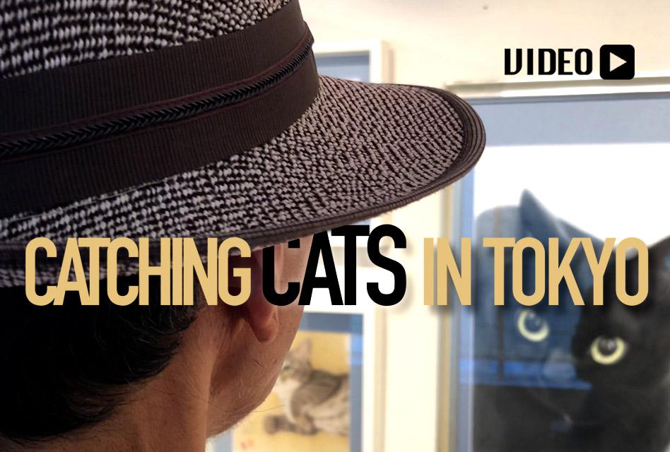 Catching Cats With Yukio Takahashi